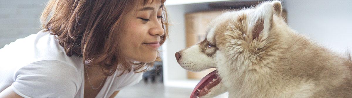 Hundehaftpflicht - Hundehalterhaftpflicht Makler Werk Köln